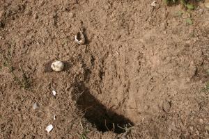 Turtle Nest next day