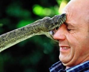 snake_biting_face4