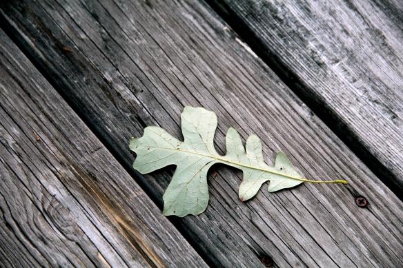 leaf2CLC