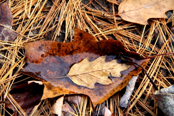 After the rain.  A leaf bathing in a leaf.