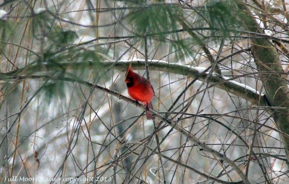 Cardinal2CLClogo