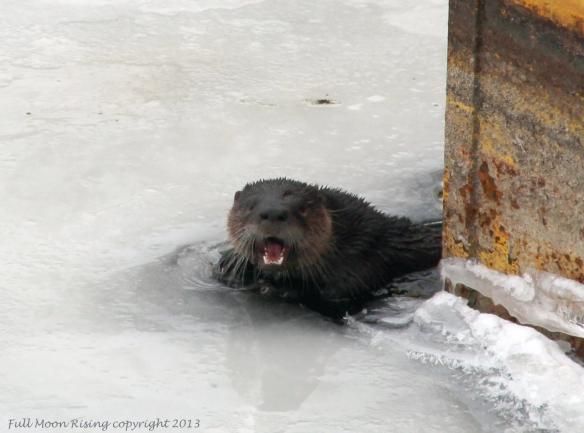 OtterheadCLClogo