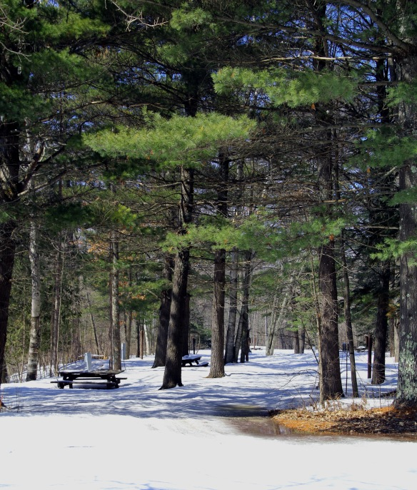 Campground road or snowmobile trail in winter.