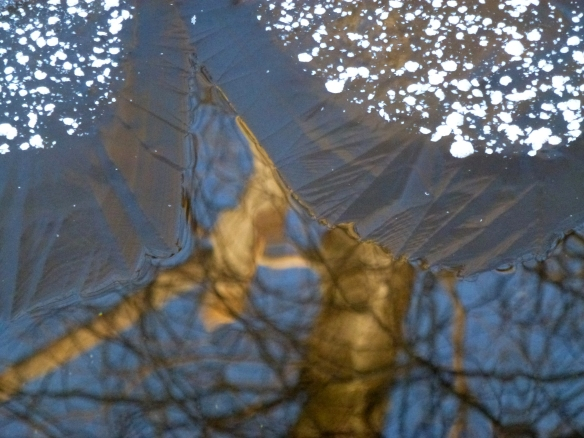 Ice tree reflection PS