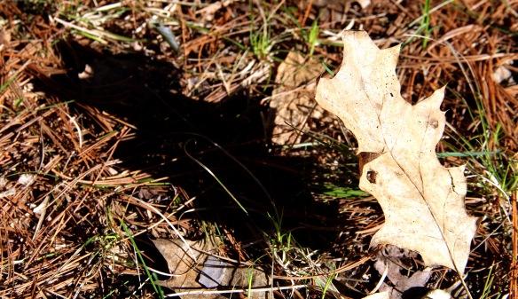 LeafShadowCLC